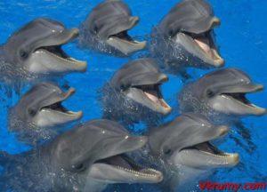 Афалины в океанариуме
